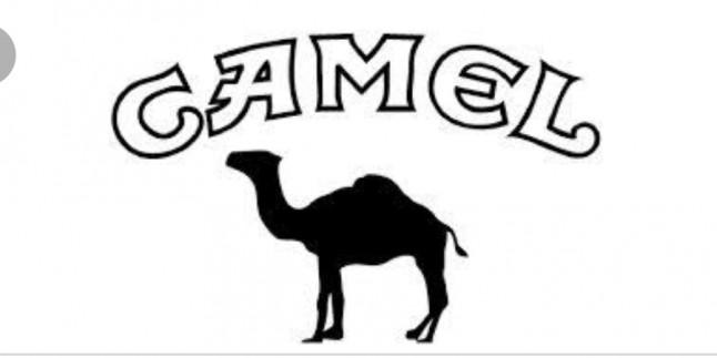 Camel İş Başvurusu